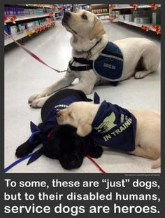 Service Dogs are Heroes