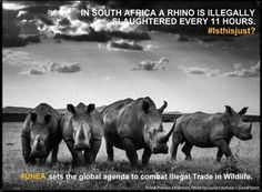 Rhino Poachers Captured thanks to 3 Brave South African Women!