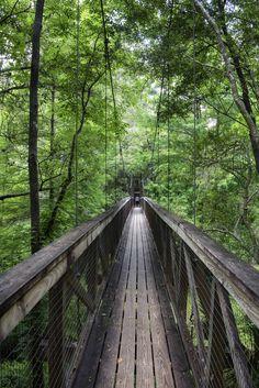 ˚Suspended Bridge - Ravine Gardens State Park, Florida