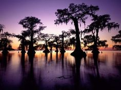 Louisiana | The Bayou | Pinterest