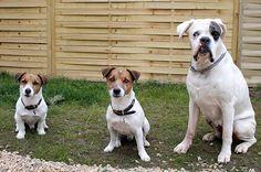 Školka pro psy VIP Pets www. Pet Hotel, Vip, Hotels, Luxury, Pets, Animals, Animals And Pets, Animales, Animaux