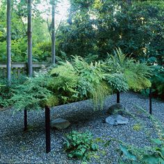 Planting a low-water fern garden