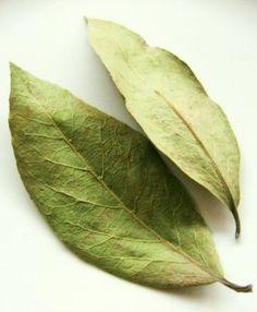 Se pun 5 g de frunze de dafin la fiert cu 300 ml de apă timp de 5 minute. Apoi ceaiul cu tot cu frunze se mai lasă la infuzat într-un termos 3-4 ore. După această perioadă, ceaiul se strecoară și se bea cu înghițituri mici, pe durata întregii zile. Health And Fitness Articles, Health And Wellness, Health Fitness, Natural Health Remedies, Home Remedies, Good To Know, Health And Beauty, Plant Leaves, Healthy