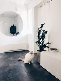 #hallway #mirror #cat
