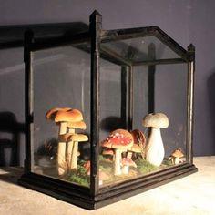 A Victorian Terrarium Full Of velvet Mushrooms - Decorative Collective