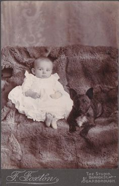 Antique Cabinet Photograph Terrier Type Dog on Couch with Small Baby Scarboroug | eBay