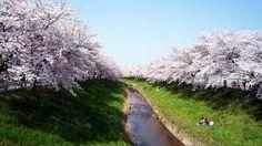 奈良 若草山 桜 - Google 検索