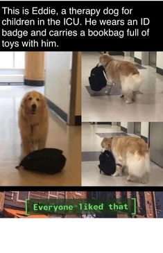 A wholesome meme for all the puppers Funny Dogs, Cute Dogs, Funny Animals, Cute Animals, Funny Memes, Cute Funny Pics, Funny Pictures, Frog Drawing, Puppy Party