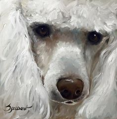 Poodle teacup toy Standard dog portrait by Mary Sparrow of Hanging the Moon Studio Prints available