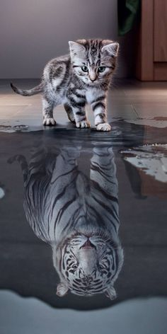 Free Kitten Wallpaper For Your Phone Baby Animals Super Cute, Cute Little Animals, Cute Funny Animals, Cute Cat Wallpaper, Animal Wallpaper, Tiger Wallpaper, Baby Animals Pictures, Cute Animal Pictures, Car Pictures