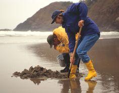 Digging for clams! #OceanShores WA