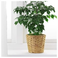 IKEA FRIDFULL plant pot A plastic inner pot makes the plant pot waterproof.