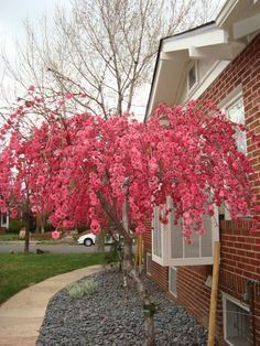 of the Best Trees for Any Backyard Weeping Peach - This is going into our back yard as soon as I can find it!Weeping Peach - This is going into our back yard as soon as I can find it! Trees And Shrubs, Flowering Trees, Trees To Plant, Dwarf Trees, Garden Trees, Lawn And Garden, Landscape Design, Garden Design, House Design