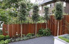 tuindesigner-tuinachitecten-bijzonder-houten-schutting-steeneiken ...