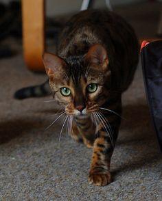 Stalking prey by Siggav, via Flickr