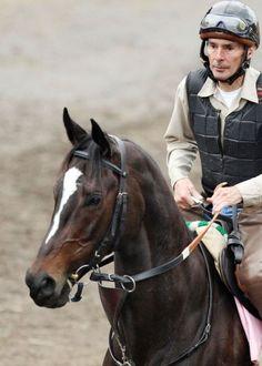 Incredible racehorse Zenyatta, breeders cup classic