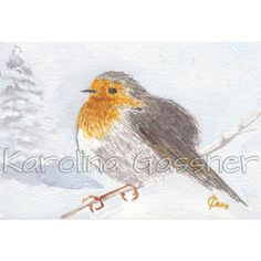 """Robin"" watercolour painting - 2017©Karolina Gassner SOLD Watercolour Paintings, Watercolor, Robin, Charity, Collections, Bird, Animals, Illustrations, Pen And Wash"