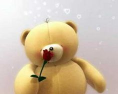 Cute Little Bear Bear