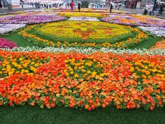 Flower garden at Yokohama