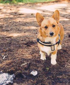 Happy National Dog Day from my favorite adventure boy, Lt. Dan!