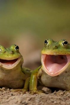 Happy Happy Frogs...