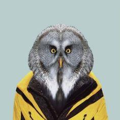 Partal   Zoo portrait: owl - Artsper