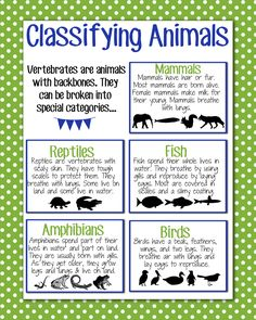 Classifying Animals Anchor Chart