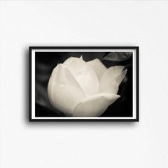 Black and White Magnolia Flowers Photo Landscape Nature Photography Print Modern Photography Wall Art Girl's Room Decor Floral by SusanGottbergPhotos on Etsy