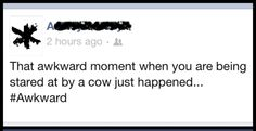 """Why is this awkward, """"A""""? Is it because both you and the cow know who is more intelligent? It's the cow by a long shot.a very long shot. Facebook Face, Long Shot, Awkward Moments, Palms, Cow, In This Moment, Shit Happens, Palmas, Palm Trees"""