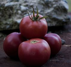 Seminţe de Roşii Roz de Berna Seeds, Vegetables, Flowers, Bern, Salads, Vegetable Recipes, Royal Icing Flowers, Flower, Florals