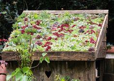 8 x kukoistavat viherkatot   Meillä kotona