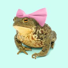 """3,281 Likes, 114 Comments - Paul Fuentes (@paulfuentes_design) on Instagram: """"🐸🎀 Tag your most beautiful friend. • #thursday #toad #photography #color #stilllife #minimal…"""""""