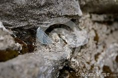 Photo about Cute small holy blue butterfly on rock - Celastrina argiolus. Image of animal, blue, small - 53315410 Blues Rock, Animals Images, Blue Butterfly, Stock Photos, Landscape, Nature, Cute, Scenery, Naturaleza