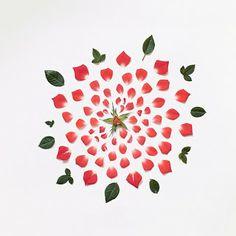 PlantaMer: Pétalos de Flores en Fotos