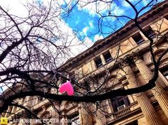 Melbourne Town Hall #CaptureTheCover entry - by Jun in Melbourne's Inner City Northern Region. Click to enter your photos!