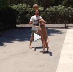 [VIDEO] Jensen playing one on one with Oscar on the 4th of July! (: