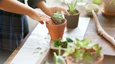 How to plant a mini succulent garden: You'll need: A selection of succulents, a wide bowl with a lip, fine gravel, potting soil, a paintbrush and a spray water bottle. Propagating Succulents, Planting Succulents, Suculentas Interior, Senior Citizen Activities, Decoration Plante, Cactus Y Suculentas, Potting Soil, Organic Vegetables, Organic Gardening