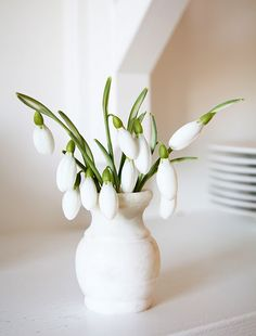 just think these snowdrops are so pretty.