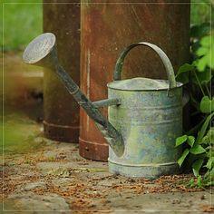 Medium continental watering can
