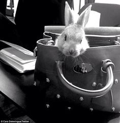 Sitting pretty: Cecil Delevingne rests inside a Mulberry tote bag in a snap shared by Cara on Twitter