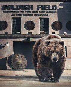 Bears Football, Chicago Bears, Brown Bear, Animals, Nfl, Instagram, Animales, Animaux, Animal