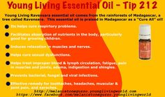 The health benefits of Young Livings Ravensara Essential Oil can be attributed to its properties as an analgesic, anti-allergenic, antibacterial, antimicrobial, antidepressant, antifungal, antiseptic, antispasmodic, antiviral, aphrodisiac, disinfectant, diuretic, expectorant, relaxant and tonic substance.   A sweet fragrance and no adverse side effects like many other synthetic disinfectants on the market.