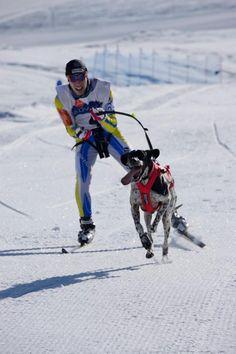 Esquí de fondo Pets, Dogs