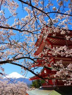 Cherry Blossoms, Chureito pagoda and Mount Fuji, Fujiyoshida, Yamanashi, Japan
