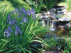 30 Stunning Landscape Design Ideas | HGTV Landscaping With Rocks, Landscaping Ideas, Backyard Ideas, Garden Ideas, Pond Plants, Something Beautiful, Water Garden, Plant Decor, Hgtv
