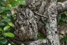 The camoflouge in nature amazes me.