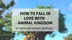 Half Day Shmalf Day! Disney's Animal Kingdom Walt Disney World  #WDW