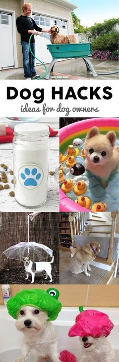 Dog Hacks! Smart DIY ideas for dog owners.