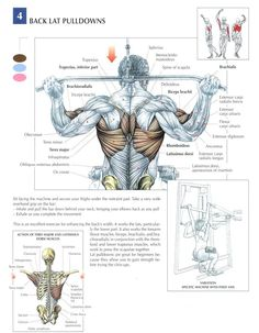 Back Lat Pulldowns ~ Re-Pinned by Crossed Irons Fitness