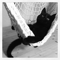 cat on interest.... I MISS MY BABY SMALLS!!!! I miss his cute cuddles and his wittle black feeties attacking my face!